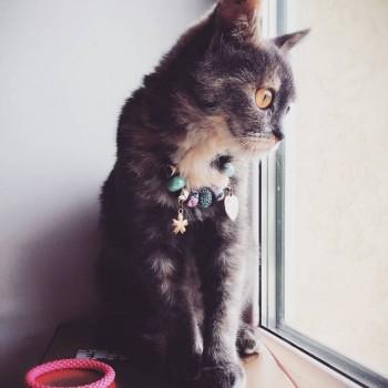 Кошечку в добрые руки - IMG_6984.JPG